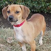 Adopt A Pet :: Reggie - London, KY