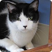 Adopt A Pet :: Poe - Northfield, MN