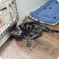 Adopt A Pet :: Tarzan - Dublin, CA