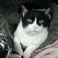 Adopt A Pet :: Jeepers - Herndon, VA