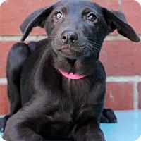 Adopt A Pet :: Tunica - Waldorf, MD