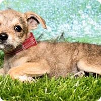 Adopt A Pet :: 523 - Aurora, CO
