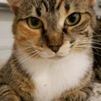 Adopt A Pet :: Peaches - West Palm Beach, FL