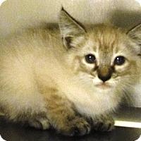 Adopt A Pet ::  - Redding, CA