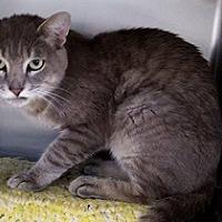 Adopt A Pet :: Canon City - Canon City, CO