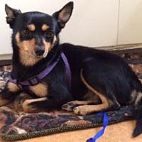 Adopt A Pet :: Monty - San Francisco, CA
