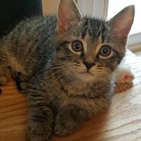Adopt A Pet :: Frida Kahlo - Alexandria, VA