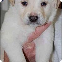 Adopt A Pet :: PUDGE - Houston, TX