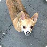 Adopt A Pet :: Lucy - Alliance, NE