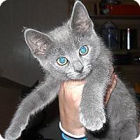 Adopt A Pet :: Squeak - Temple, PA