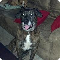 Adopt A Pet :: Adonis - Warren, NJ