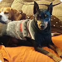 Adopt A Pet :: Tigger (courtesy post) - Malaga, NJ