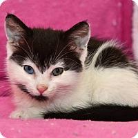 Adopt A Pet :: Disneyann - Davis, CA
