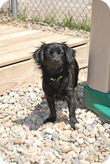 Dachshund Mix Dog for adoption in Berea, Ohio - Fiona