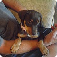 Adopt A Pet :: Abbey - Sacramento, CA