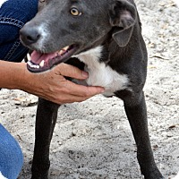 Adopt A Pet :: Mona - Okeechobee, FL