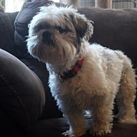 Adopt A Pet :: Dash (bonded with Tank) - DeSoto, IA