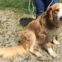 Adopt A Pet :: Raider - Capon Bridge, WV