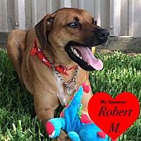 Adopt A Pet :: Copper - San Leon, TX