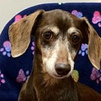 Adopt A Pet :: Harrah - Weston, FL