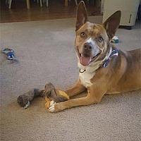 Adopt A Pet :: Harlee - Irvine, CA
