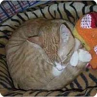 Adopt A Pet :: Beau - Chesapeake, VA