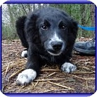 Adopt A Pet :: Grady - Brattleboro, VT