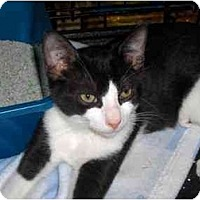 Adopt A Pet :: Mork - Richmond, VA