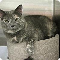 Domestic Shorthair Cat for adoption in O'Fallon, Missouri - Nellie