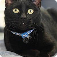 Adopt A Pet :: Calpyso - Columbia, MD
