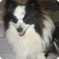 Adopt A Pet :: JJ - Salem, NH