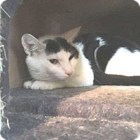 Adopt A Pet :: Sherwin - Putnam, CT