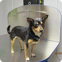 Adopt A Pet :: Orion - Shawnee Mission, KS