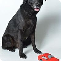 Adopt A Pet :: Casey - San Francisco, CA