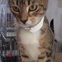 Adopt A Pet :: Iggy - Monroe, NY