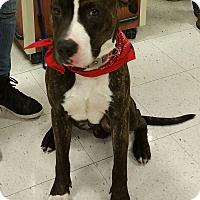 Adopt A Pet :: Kane - PLAINFIELD, IN
