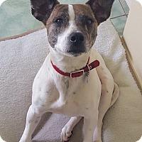 Adopt A Pet :: Rowdy - Toronto, ON