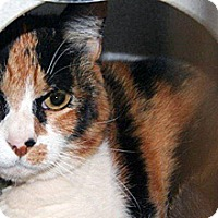 Adopt A Pet :: Roxy - Wildomar, CA