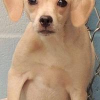 Adopt A Pet :: Fletcher - Joplin, MO
