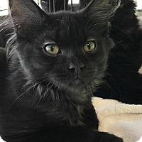 Adopt A Pet :: Smokey - Ortonville, MI