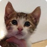 Adopt A Pet :: Ron - Bauxite, AR