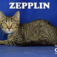 Adopt A Pet :: Zepplin - Carencro, LA