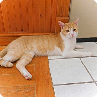 Adopt A Pet :: Archie - Ridgway, CO