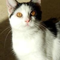 Adopt A Pet :: Ale - Monroe, WI