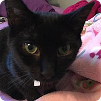 Adopt A Pet :: IMMA - New Bern, NC