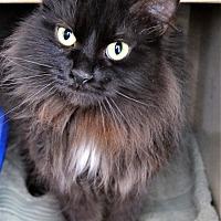 Adopt A Pet :: Onyx - Michigan City, IN