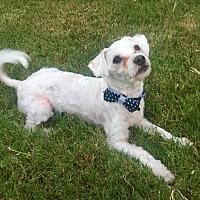 Adopt A Pet :: Sonic - MCKINNEY, TX