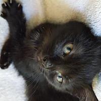 Adopt A Pet :: Shortcake - Fishkill, NY