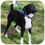Photo 1 - Labrador Retriever Mix Dog for adoption in kennebunkport, Maine - Skipo-ADOPTED!