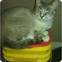 Adopt A Pet :: Ivory - Mobile, AL